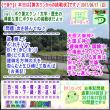 [古事記]第284回【算太クンからの挑戦状2017】(文学・歴史)