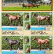 【2018 JRAブリーズアップセール】の上場候補馬写真一覧が公開!