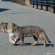 ここ1年くらいで1番かわいいネコ写真が撮れた(気がする)! @相島のネコたち