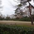 京都御苑の森