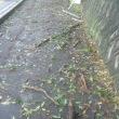 台風一過のウォーキング。