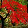 神代植物公園の紅葉