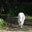 白猫に会った。