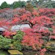 京都、実相院&東寺ツアー