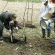 地域の植樹際に参加してきました。