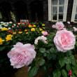 旧古河庭園のバラ・・7