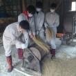 修学旅行生の林業、農業体験 B班