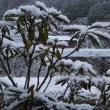 県の北部は雪と言っても・・・