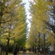 こまエコ散歩(秋) ~駒場・東山いちょう並木コース~