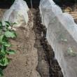 ジャガイモ畑作り