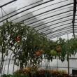 ニシン漬け  ハウスのトマト  花豆  ホップコーン