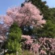 新橋浅間神社☆富士山と桜♡