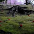 梅ひかり 苔に椿が 浮かびたる