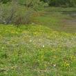 黒姫山山麓古池の新緑
