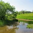 水辺に輝く新緑の風景