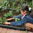 緑のカーテン大作戦・ヘチマの苗を植えました