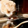 ネコとギター