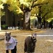 秋のT大散歩<アルブレヒト君とデート>