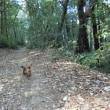 山歩きをしました。Sand Stoneという巨岩探訪 (El Corte de Madera保護区)犬も道連れです。。