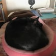 黒猫ジジィです かあちゃん、しばらく入院します