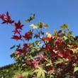 早過ぎる秋の気配
