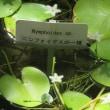 楽書き雑記「ブラシノキの花と印象的なハイビスカスに出会う=名古屋・東山動物園と植物園温室で」