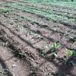 2017年10月8日 肥料を補充しました。山蛭(山ヒル)らしきものがいました。