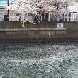 🌸  春  🌸