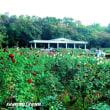 「神代植物公園」の花の女王「バラ園」