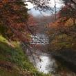 麗しき佐保川の秋
