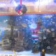 エルム水族館もクリスマス