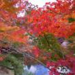 三景園の紅葉