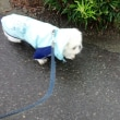 雨の散歩だワン