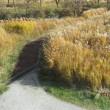 今年も 小さい秋を見つけました