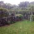 梅雨の西表