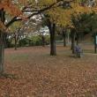 晩秋の公園~~