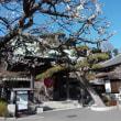 「長谷寺」に春の気配