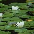 アジサイが見頃な所沢航空記念公園の日本庭園(埼玉・所沢)