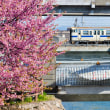 2019年は小倉の寒桜から見た、さくら前線の北上開始