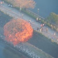 横浜 桜木町でも綺麗な紅葉が見られます