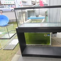 90cm ガラス水槽
