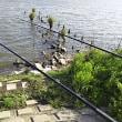 GWアオ釣り第1弾