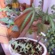 Garden BASE