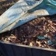 堆肥用に温度計を購入