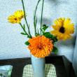 雨!昨日堅田の道の駅で衝動買い苗を植える。