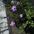 路傍の花その後