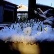 愛しの先住猫のリサと、12年前の雪景色にゃりぃ~♪