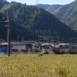 10月6日撮影 本山の蕎麦畑にて すれ違い狙い
