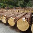林業用語③ 寒伐り材