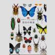 昆虫の教室